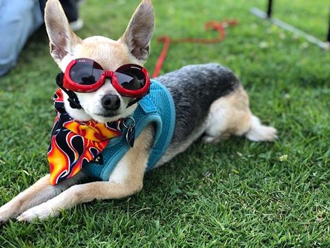 cool dog_sm