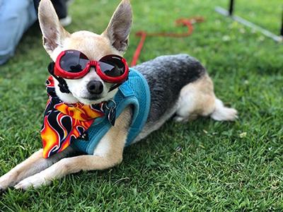 cool-dog_sm-1